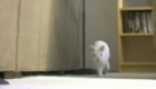 bunny walks like person