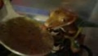 crested gecko eating