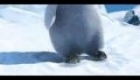 Happy Feet Macarena Move