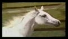 Horse audition