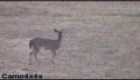 HOW NOT TO KILL A DEER