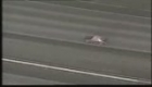 New Jersey Car Chase ends in Crash.flv