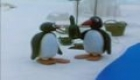 Pingu and the Message in a Bottle