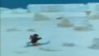 Pingu Goes Cross Country Skiing