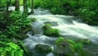 Relaxation Meditation Nature Sounds