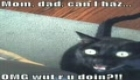 ----- Funny Cats 4 -----