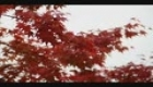 TRADITIONAL JAPAN MUSIC - SAKURA: JAPANESE FOLK MUSIC