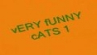 vERY fUNNY cATS 2